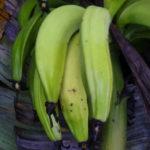 banano-2